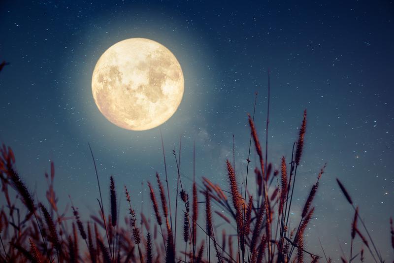 彼女に教えてあげたい【月に関する10のトリビア】 | 著名人 | LEON ...